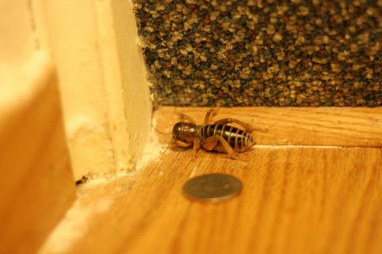 парализованный таракан
