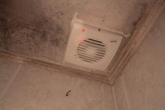 плесень на потолке