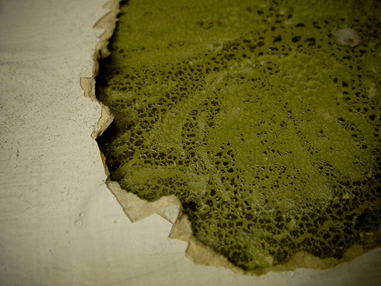 Как избавиться от плесени на стенах на обоях