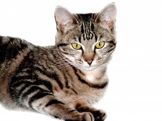 молодая кошка