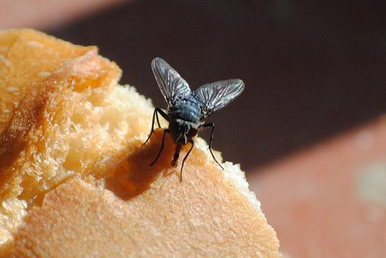 мошка на хлебе
