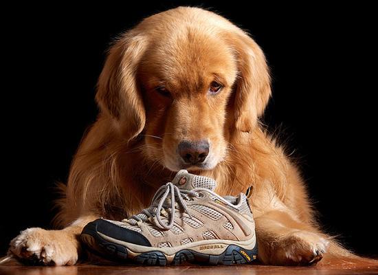 неприятный запах в кроссовках