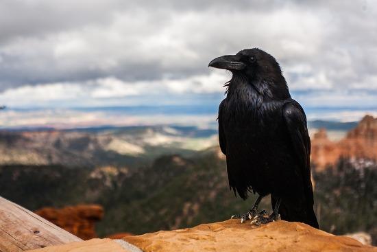 чучело вороны отпугнет голубей