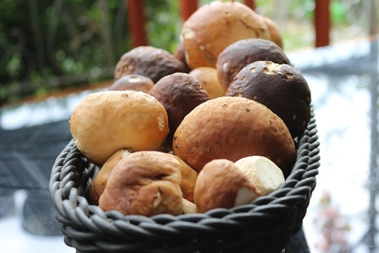 хранение белых грибов