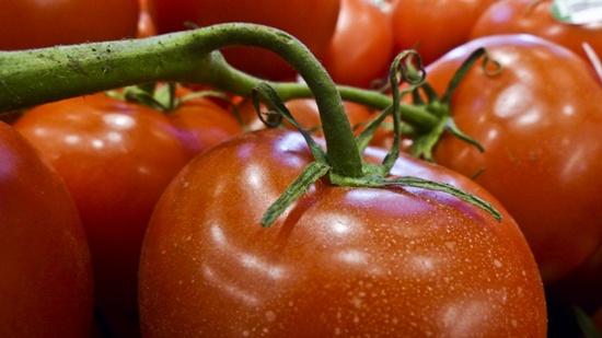 хранение помидоров на дозревание