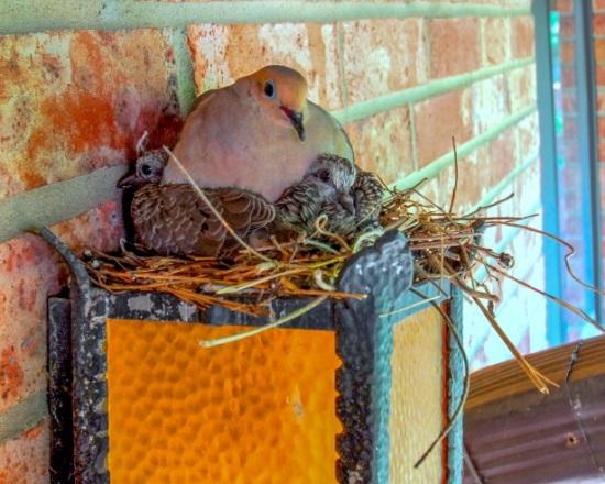 голубь на подоконнике