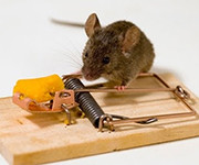 избавляемся от мышей