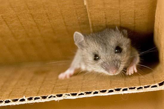 коробка для избавления от мышей