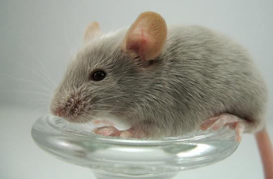 ловугка для мышей