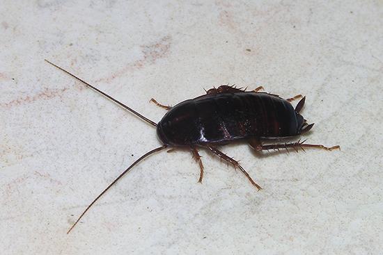 таракан на полу