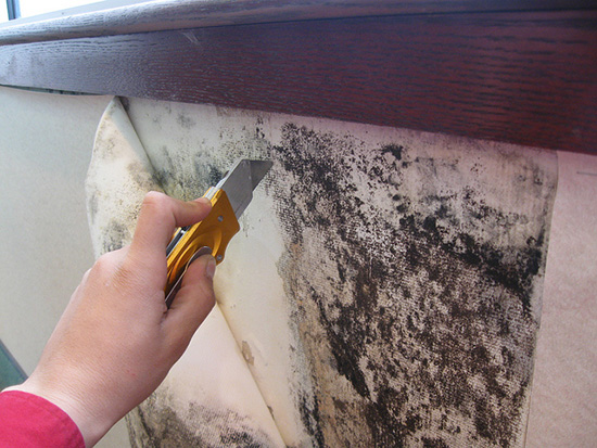 чистка плесени со стен