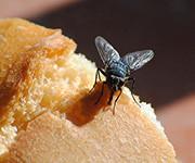 домашние мошки на хлебе
