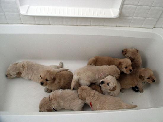 животные в акриловой ванне
