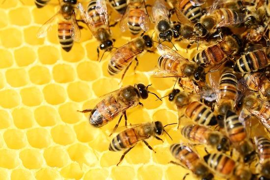 мед и пчелы