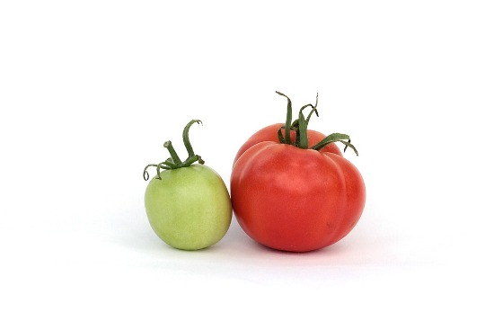 как хранить зеленые помидоры чтобы они дозрели