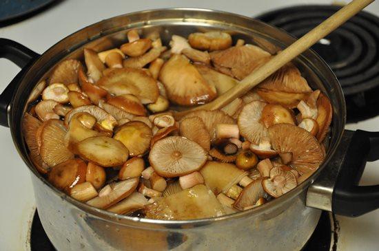 вареные грибы