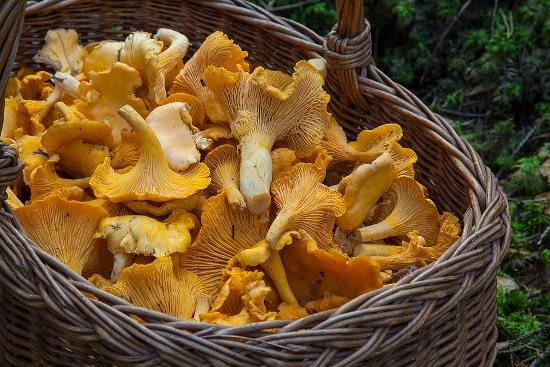 хранение грибов лисичек