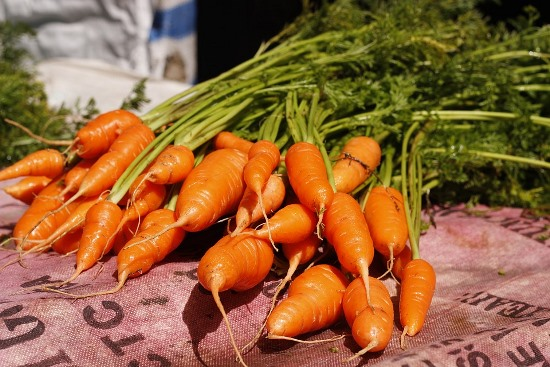 хранение морковки в холодильнике